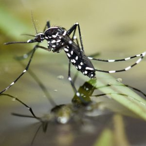 commercial mosquito control
