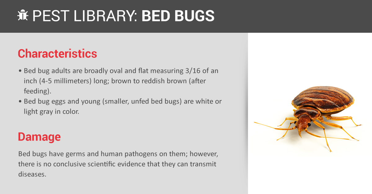 Bed Bug Prevention Indentification Copesan Pest Library