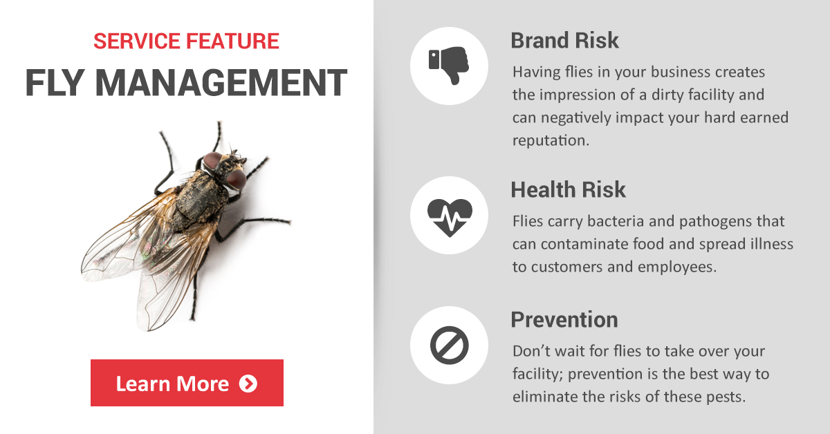 Commercial Fly Management, Control & Prevention   Copesan
