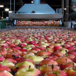 pest management food processing apples