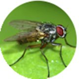 ​Comprehensive Fly Control
