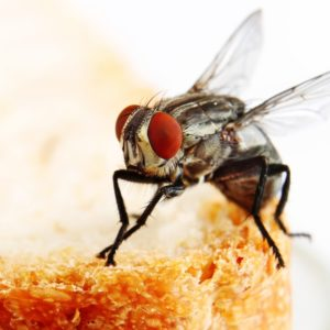 commercial fly control