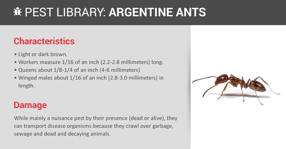 Argentine Ant Control & ID   Copesan Pest Library