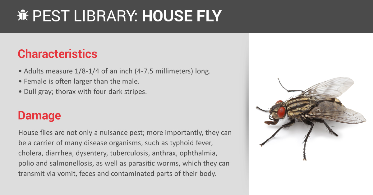 Image Result For Carpenter Ant Removal