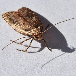common stored product pests in commercial establishments