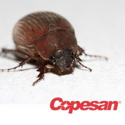 The Return Of June Bugs: What This Means For Your Facility