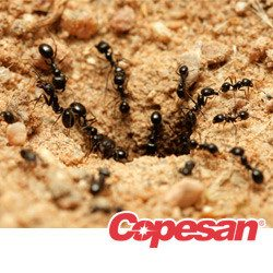 as the manager of a food processing or storage facility you know that stored product pests can be a serious problem these pests are known for infesting