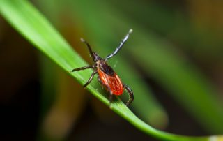 tick management solutions