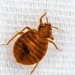 Bed Bug Management