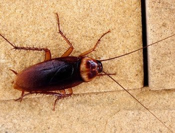 cockroach control for business